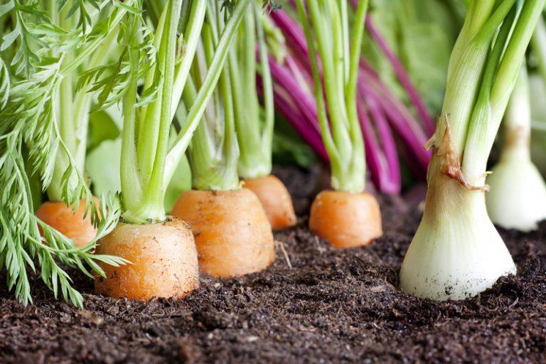 овочів